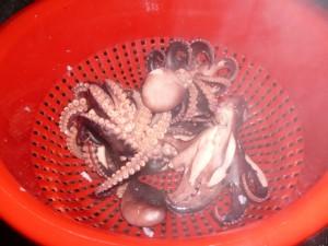 drain octopus